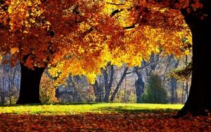 blog-herfst-achtergronden-herfst-wallpapers-1